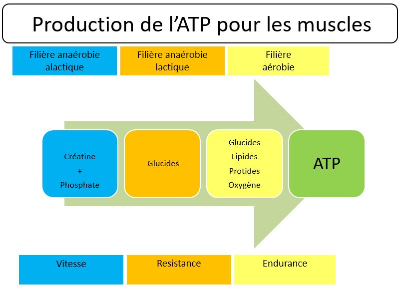 préparation physique tennis production atp